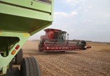 Farmer harvesting soybeans near Worthington, Minnesota